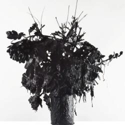 Love Story 3, 2013, fiori, ceramica, colla, cemento, smalto nero, 50 x 50 x 60 cm