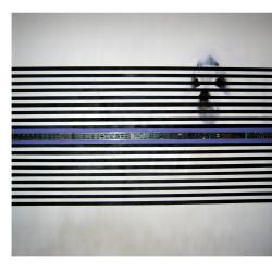 Cane prigioniero, 2007.#C1D