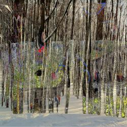 Trees3, 2014, matite colorate, pennarello, acrilico su foto, digitalizzata e stampata su plexiglas trasparente, 69 x 92 x 0,8 cm