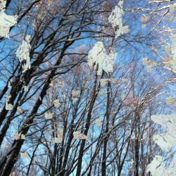Nature, 2014, matite colorate, pennarello, acrilico su foto, digitalizzata e stampata su plexiglas trasparente, 50 x 67 x 0,8 cm
